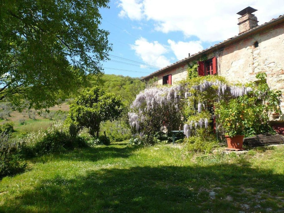 Cottage in tuscan countryside houses for rent in for Rent a house in tuscany