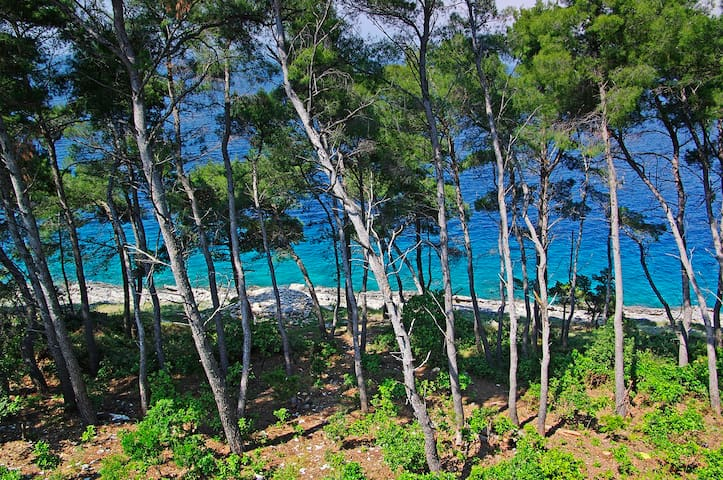 Sea view through pine trees - Vela Luka - Talo