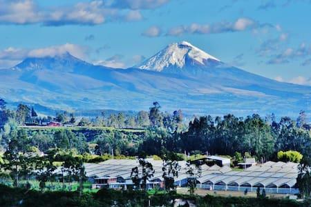 Cotopaxi Room - Quito - Talo
