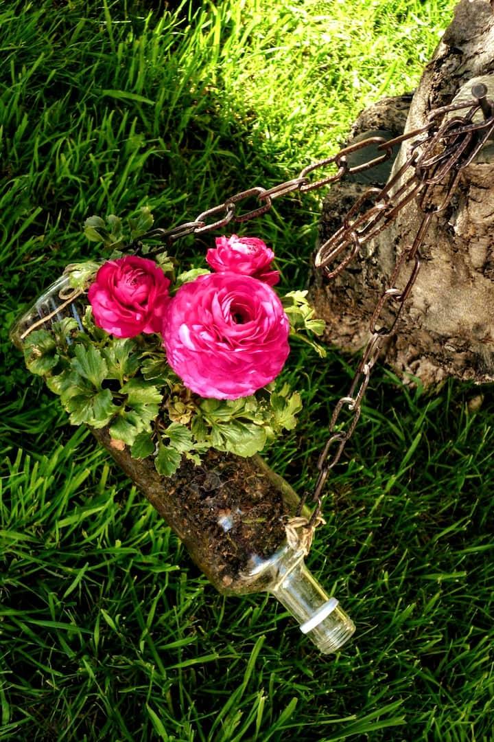 Flower growes in hanging bottle