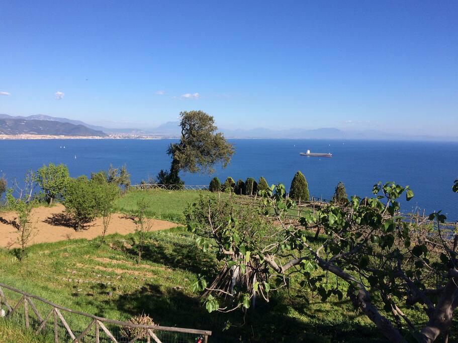 Sopra il Limoneto: orto e terrazze