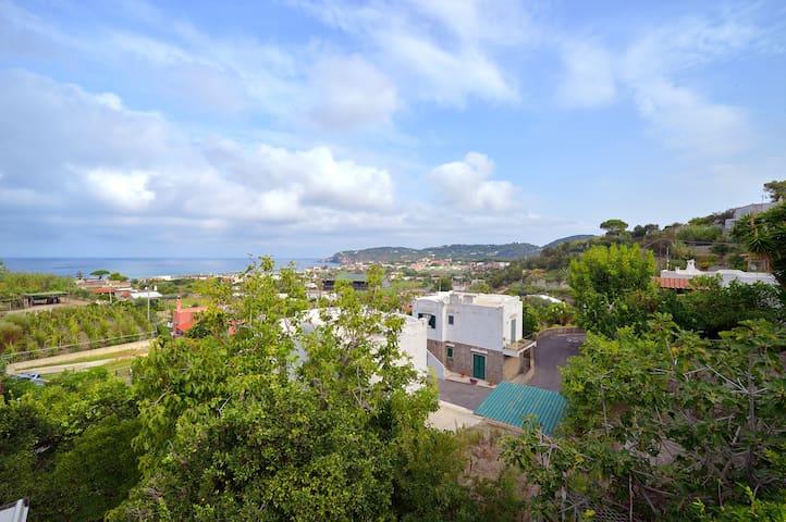 panoramic apartment FORIO ISCHIA - Forio - House