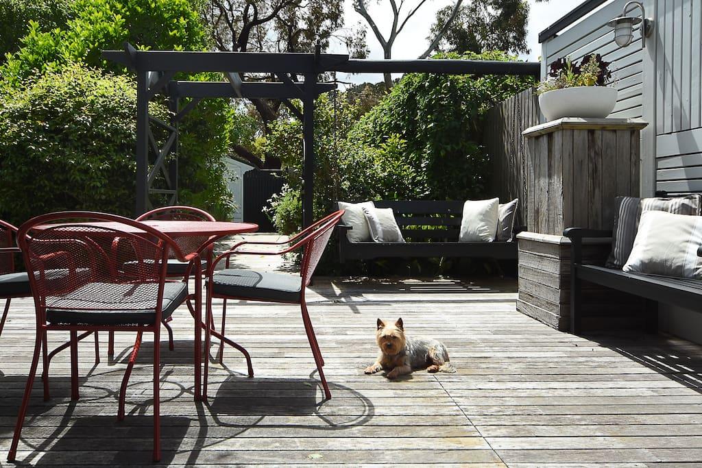 Stella, enjoying the sun on the deck