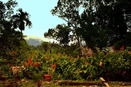 Jungle homestay - Rambutan Room