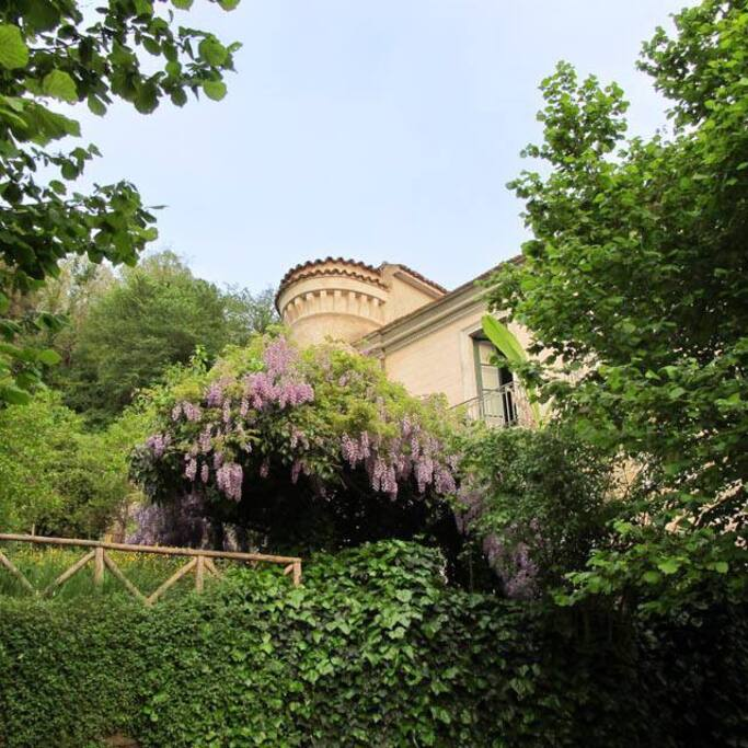 garden view of the Palazzo