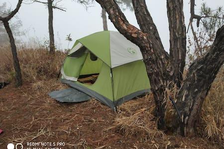 Urlong Tea Estate: Wild Camping