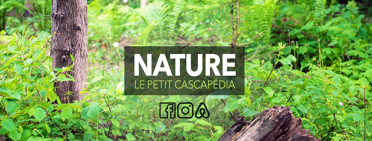Chalet le Petit-Cascapédia