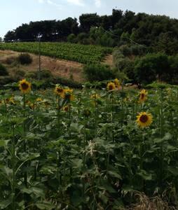 Agriturismo Poggio Ciliegio & Wines - Fonteblanda
