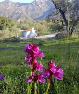 Casita Algarrobo - Jete - Blockhütte