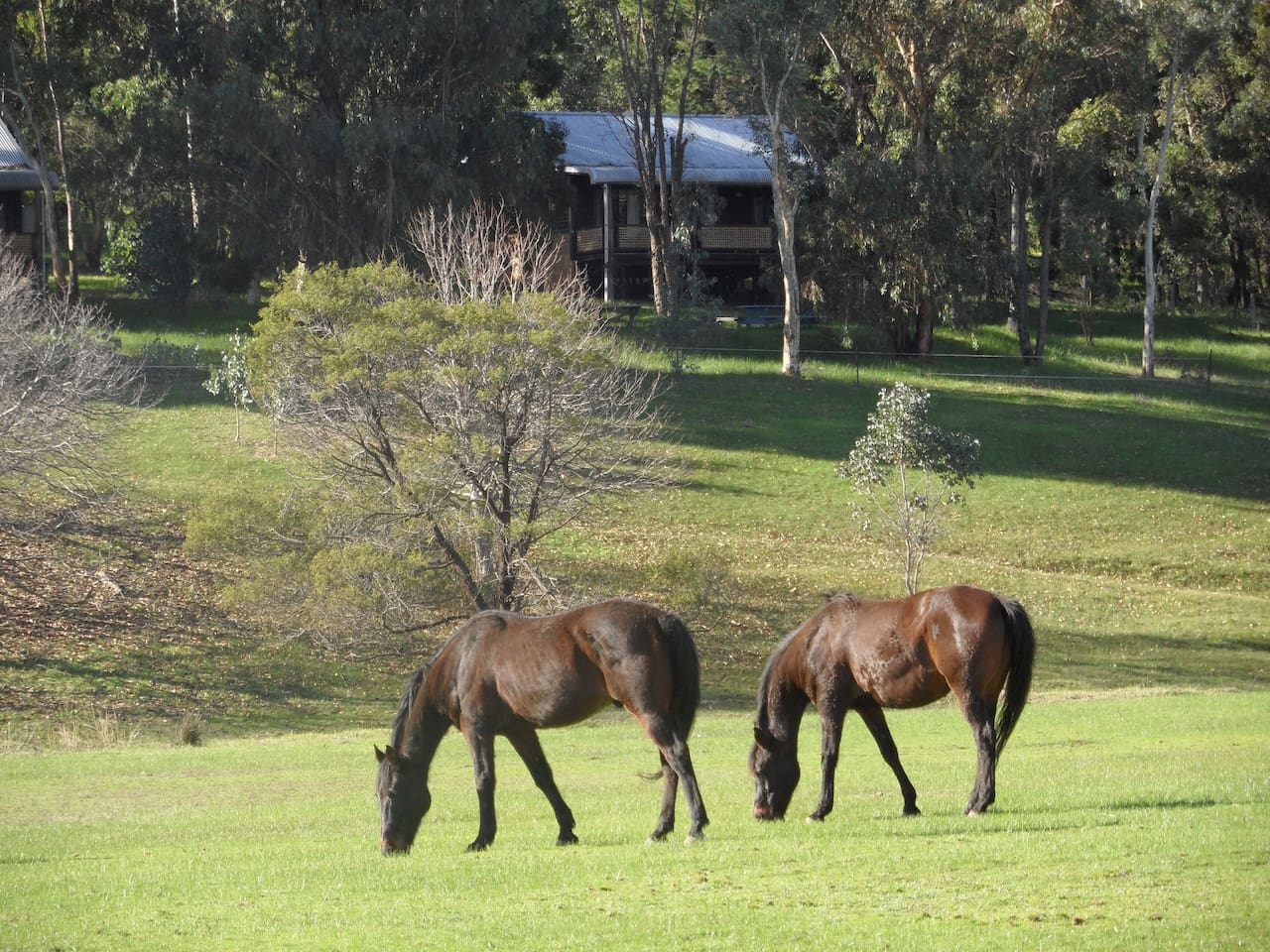 Rammed Earth and Jarrah, 2 bedroom cottages in tranquil treed setting overlooking the  water ways