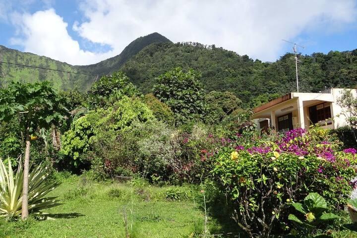 Chambre en pleine verdure tropicale