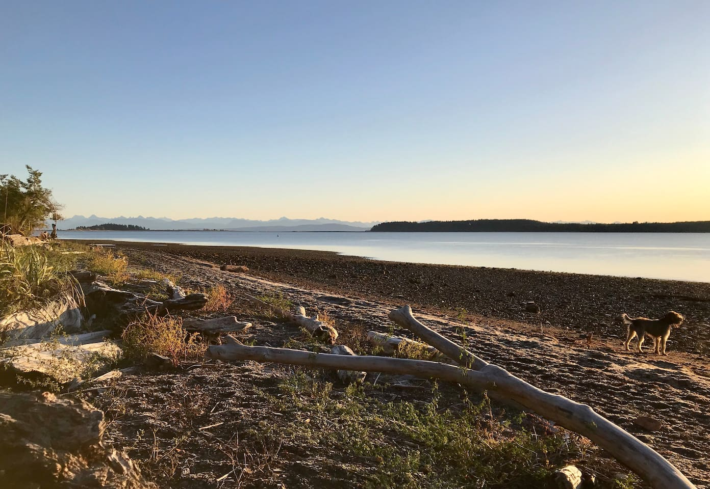 Union Bay beach offers great dog friendly trails, stunning views over to Tree Island and Denman Island.  Eagle, heron, migratory birds and sea lion sightings are common, keep your eyes peeled for dolphins and whales that cruise the straight.