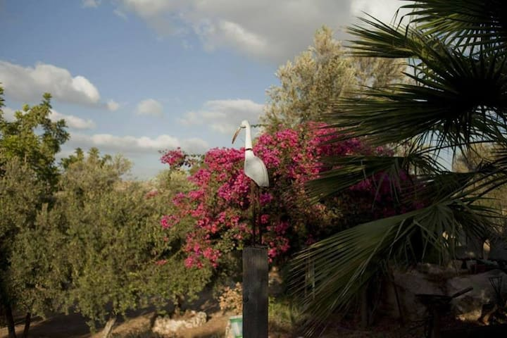 Ecological beautiful camping site. - Beit Nehemia - Σκηνή