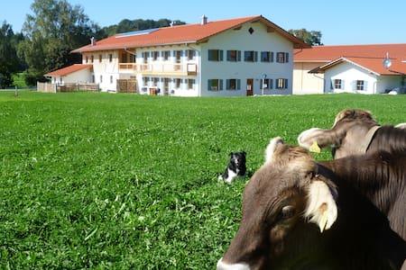 Neubauferienwohnung in Allgäuer Hof - Kaltental/Frankenhofen