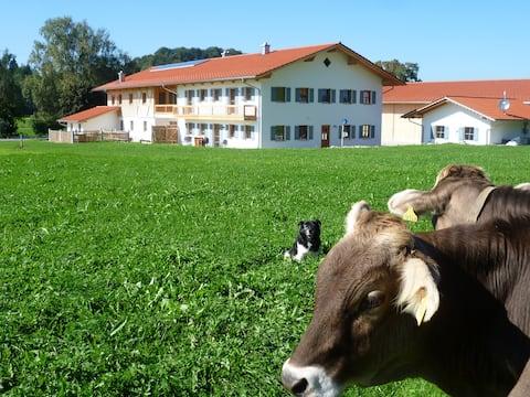 Neubauferienwohnung in Allgäuer Hof
