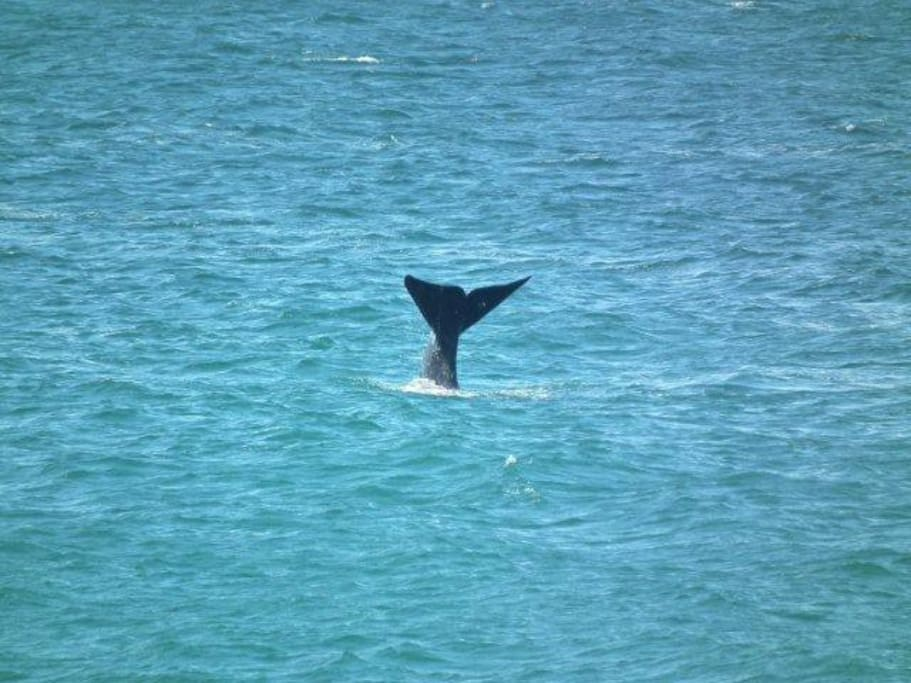 Photo of whale taken from porch
