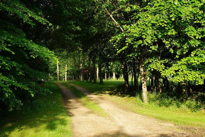 La petite fouillarde - Marigné-Laillé - Luontohotelli