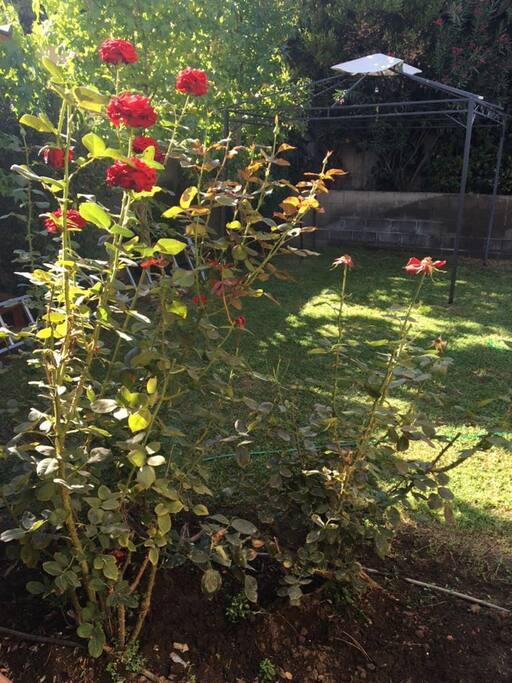 Tranquilo Jardín