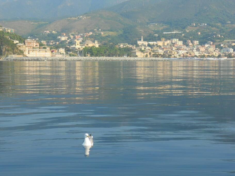 Arenzano dal mare Arenzano from the sea