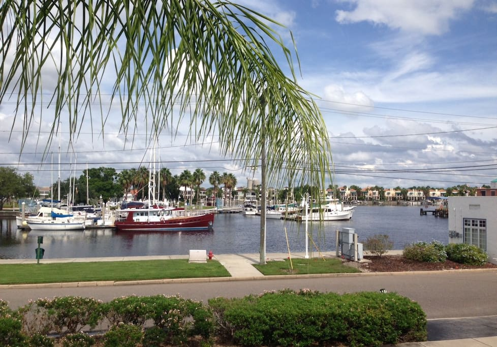 Apartments For Rent In Davis Island Tampa Fl