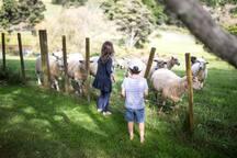 Children feeding the Sheep