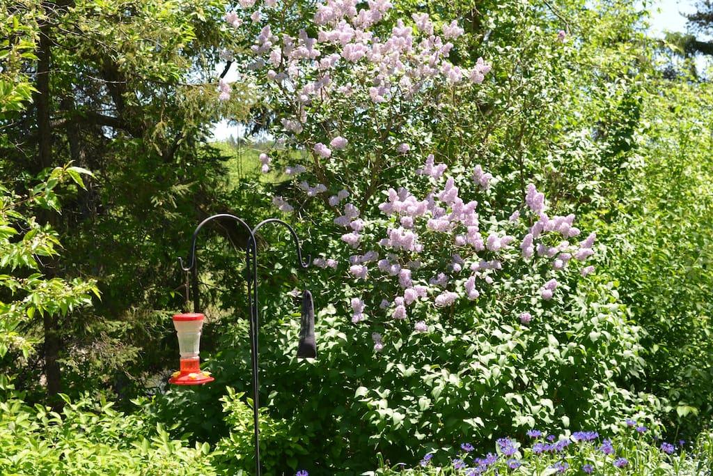 Our hummingbird empire