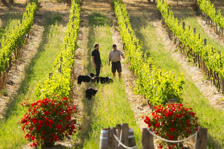 Discover life in a working vineyard.