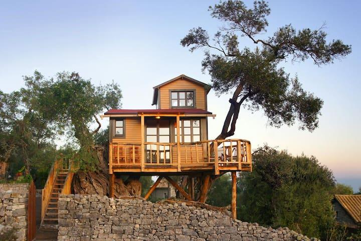 Nasos' Treehouse