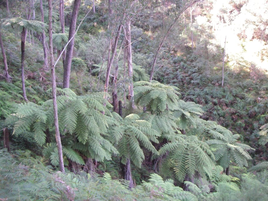 Deep gully lined with tree ferns, about an hours hike on the property