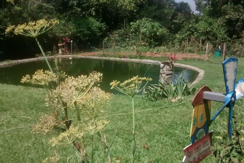 Lago com tilapias
