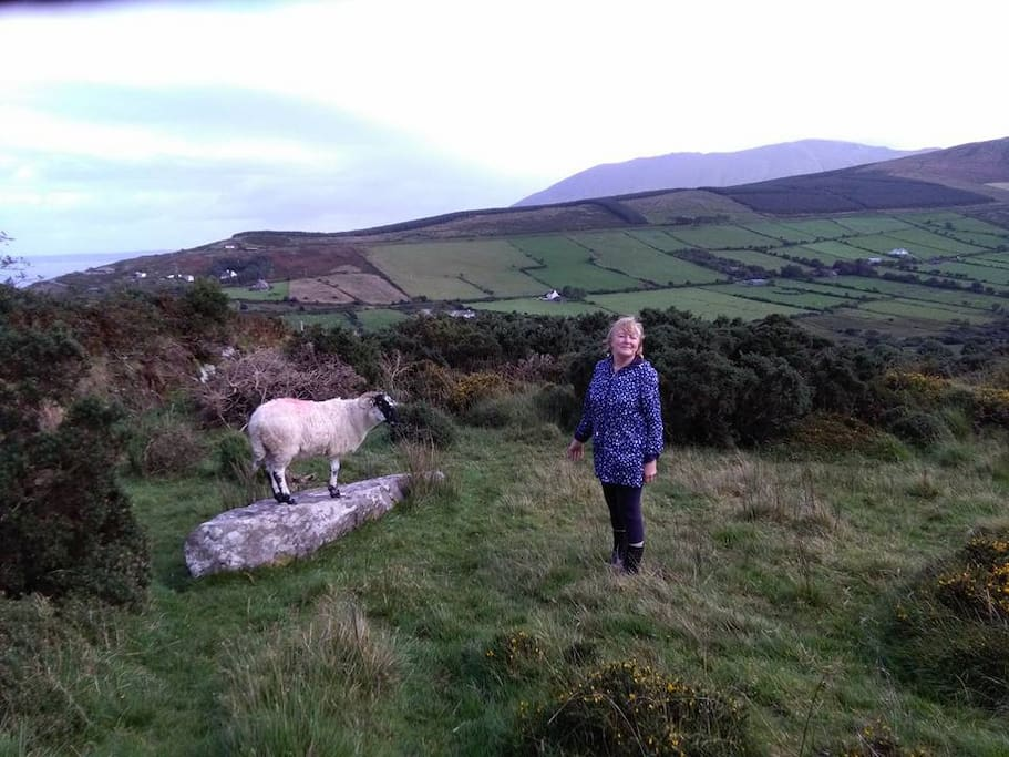 """Sheep aloft a fallen stone age  """"Gallaun""""  dating back 5000 years to the first farmers who cultivated this land"""