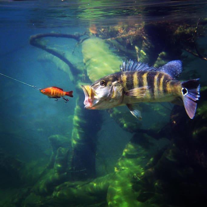 Mergulho e Pesca