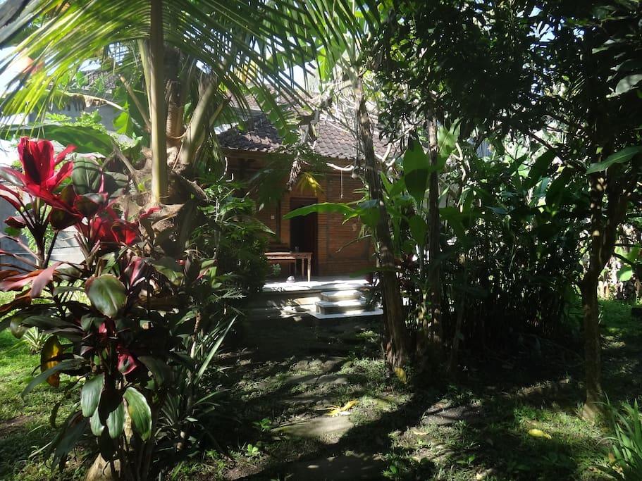 hanuman bungalow behind the jungle