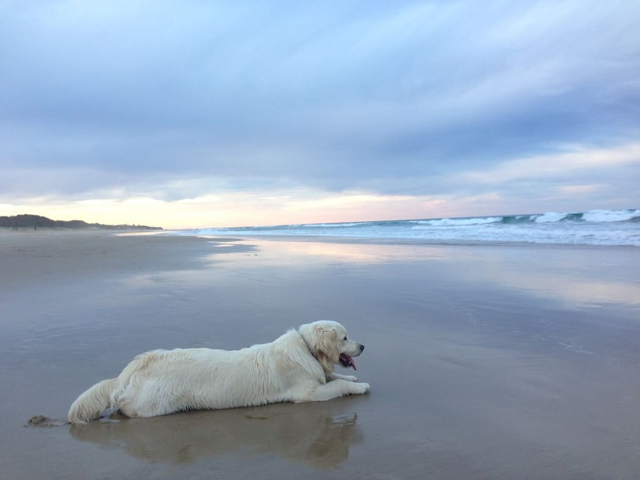 Dog off leash beach (5-8 am & pm)
