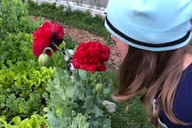 Jenny smelling the huge poppies!