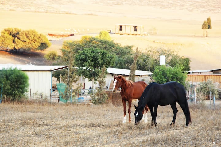 Farm in the northern Negev - Meitar - กระท่อม