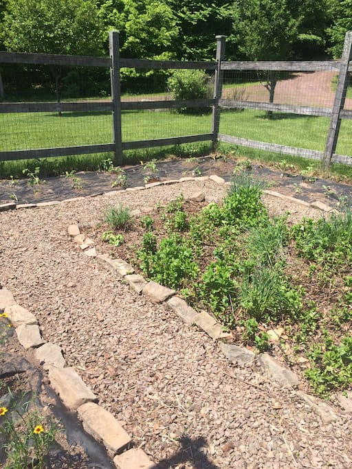 Vegetable garden, front of house