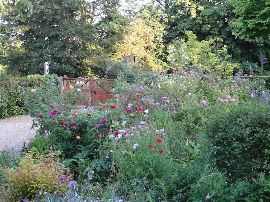 Midsummer at Rosemary