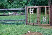 New Gate & Fire Pit