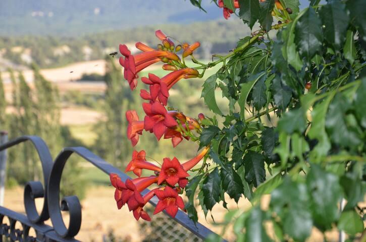 Flor autóctona de la zona