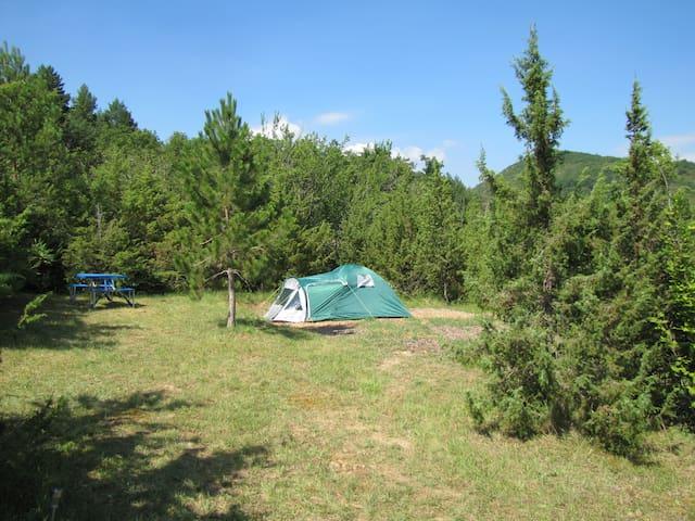 Camping des vignes Emplacement libre 4 pers