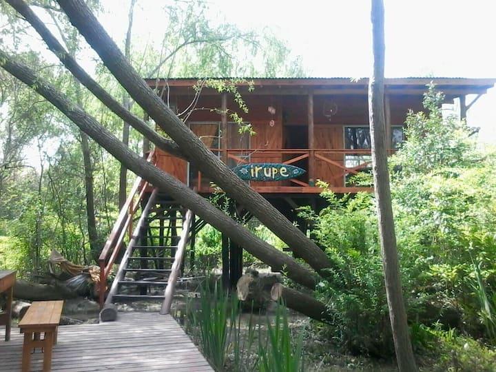 Cabaña en el Delta, Irupe