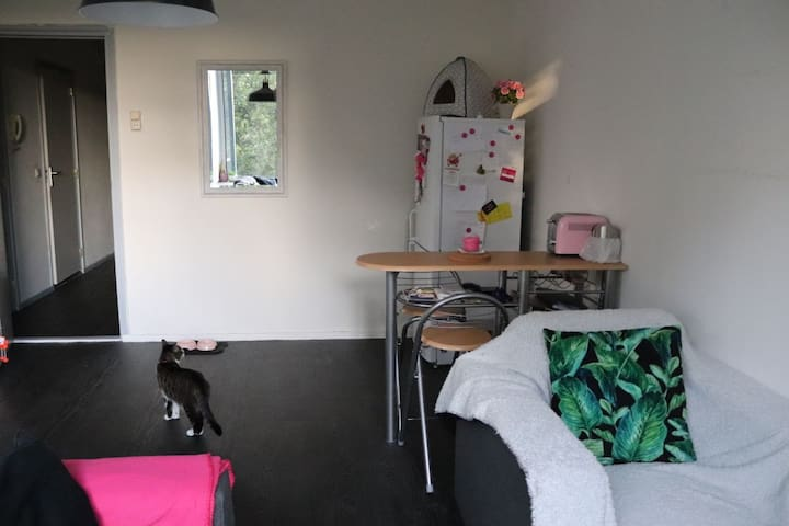 Cozy little appartment for quick stays! Woman only