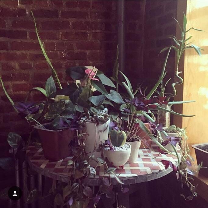 Little indoor plant garden