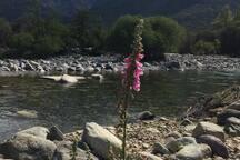 Le chalet de la vallée d Asco