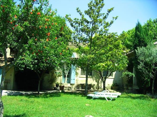 la juliane - Pernes-les-Fontaines - Pis