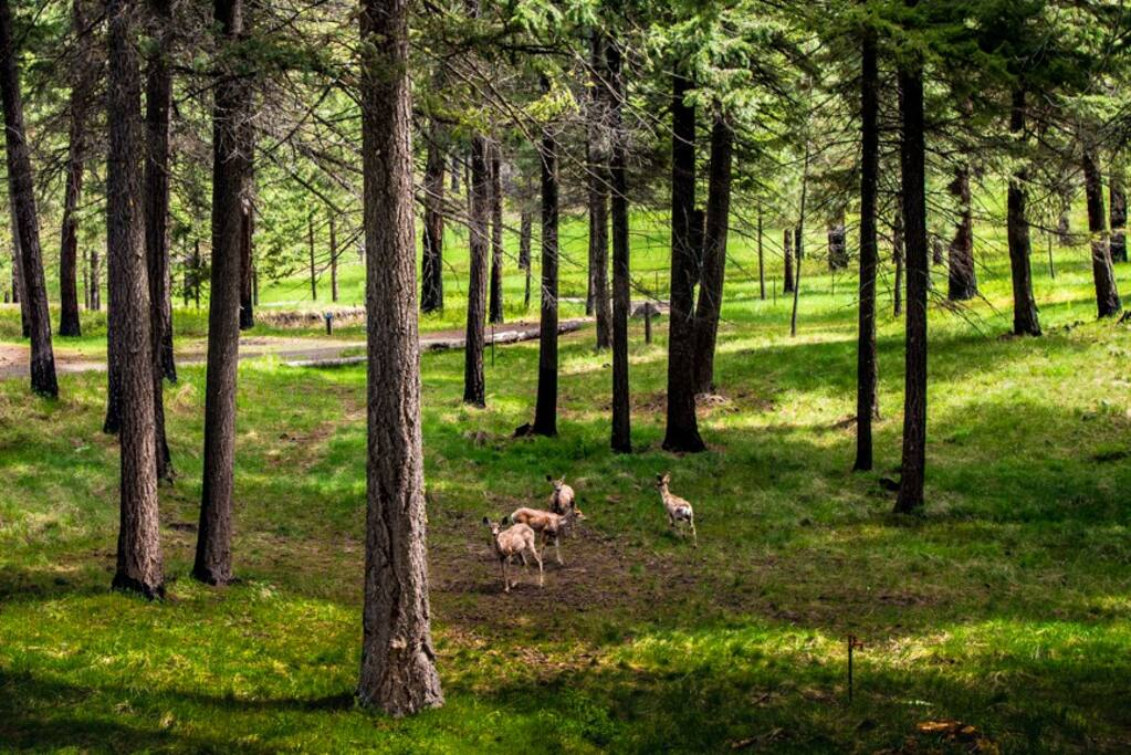 25 acres with wildlife