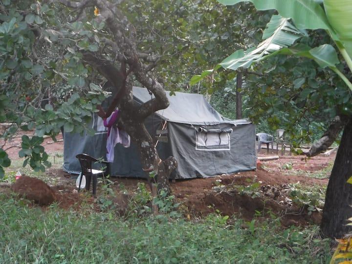 Tent No 1 @ Jungle Resort in Agonda