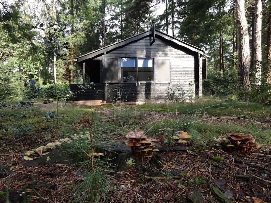 Blokhut, bos en natuurlijk paddestoelen