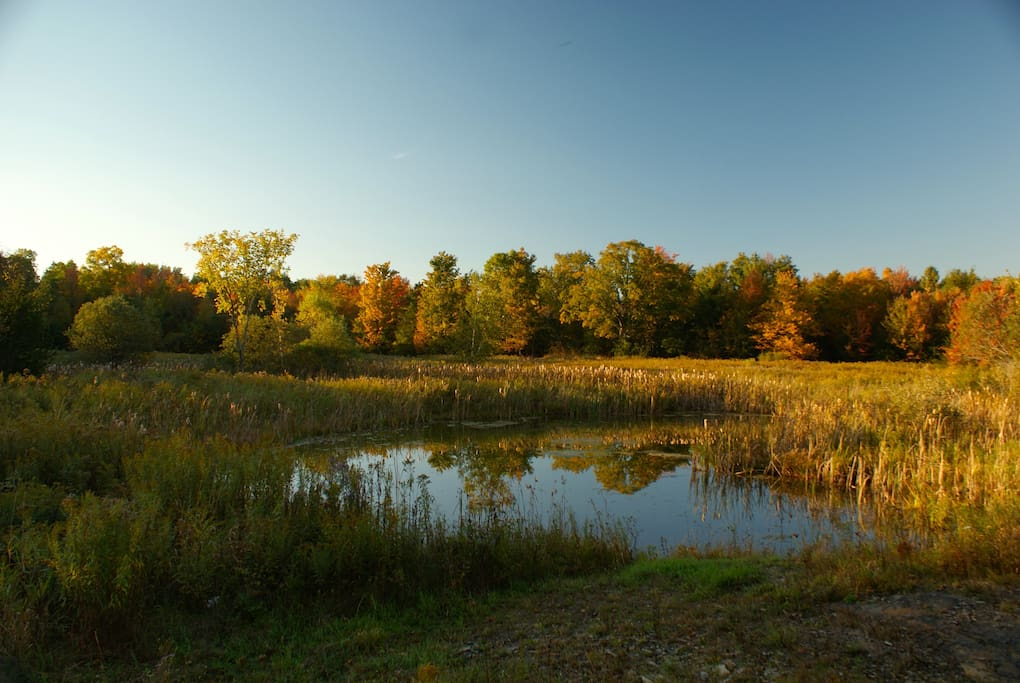 Fall by the pond, a short walk from the house!